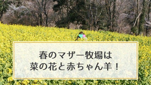 春のマザー牧場は菜の花と赤ちゃん羊